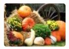 Осенний сад и огород. Продукты пчеловодства. Тюмень 2021