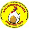 Урюпинская птицефабрика