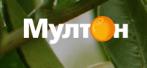 МУЛТОН